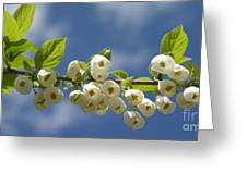 Japanese Snowbell Branch Panorama Greeting Card