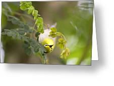 Japanese White Eyes Bird Greeting Card