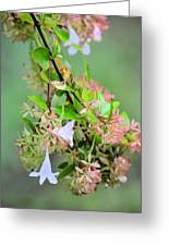 Japonica In Autumn Greeting Card