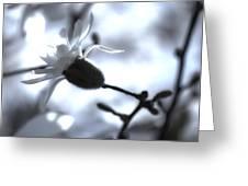 Jasmine Blossom Greeting Card