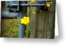 Jasmine Flowers On Gate Latch Greeting Card