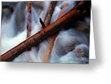 Jasper - Beauty Creek Logs Greeting Card