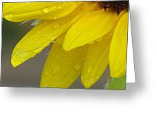 Jaune Petals Greeting Card