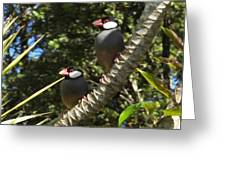 Java Sparrows Greeting Card by Colleen Cannon
