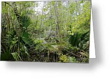 Jean Lafitte National Preserve Swamp Louisiana Greeting Card