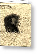 Jean Lafitte's Headless Graveyard Cat Greeting Card