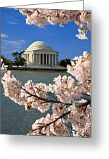 Jefferson Memorial Cherry Trees Greeting Card