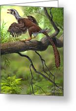 Jeholornis Prima Perched On A Tree Greeting Card by Sergey Krasovskiy