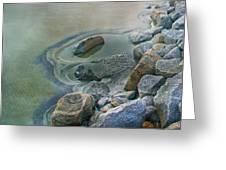 Jekyll Island Tidal Pool Greeting Card