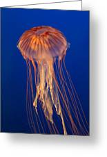 Jelly Fish Greeting Card by Eti Reid