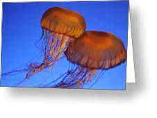 Jelly Fish In Harmony Greeting Card