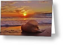 Jelly Fish Sunrise Avon Pier 1 1/15 Greeting Card