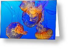 Jellyfish IIi Greeting Card