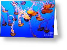 Jellyfish In Abundance Greeting Card