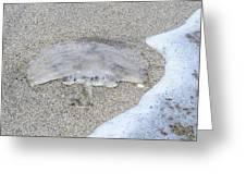 Jellyfish On The Sand Greeting Card