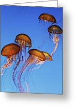 Jellyfish Swarm Greeting Card