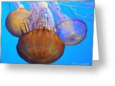 Jellyfish Trio Greeting Card
