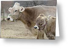 Jersey Cow And Calf Greeting Card