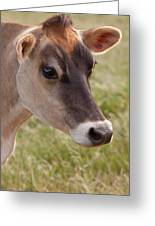 Jersey Cow Portrait Greeting Card