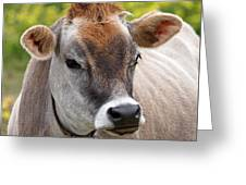 Jersey Cow With Attitude - Square Greeting Card
