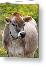 Jersey Cow With Attitude - Vertical Greeting Card
