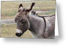 Jerusalem Donkey Greeting Card