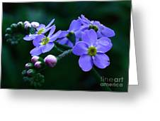 Jewel In The Shadows Greeting Card