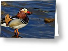 Jewel Of The Pond Greeting Card