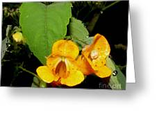 Jewel Weed Greeting Card