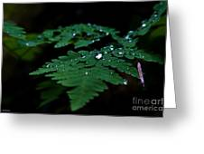 Jeweled Fern Greeting Card by Chris Heitstuman