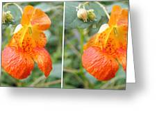 Jewelweed Flower In Stereo Greeting Card
