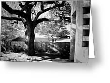 Jfk-the Stockade Fence-dealy Plaza Greeting Card