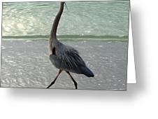 Strutting The Beach Greeting Card