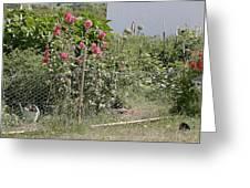Jo Jo's Garden 3 Greeting Card