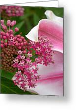 Asclepias And Friend Greeting Card