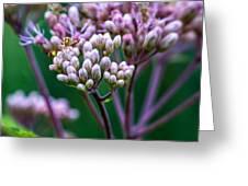Joe Pye Weed And Bug Greeting Card