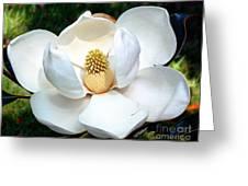John's Magnolia Greeting Card