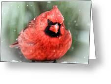 Jolly Old ....... Cardinal  Greeting Card