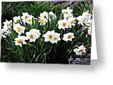 Jonquils Greeting Card