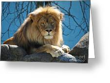 Joshua The Lion On His Rock Greeting Card
