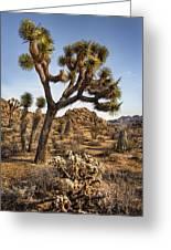 Joshua Tree 16 Greeting Card