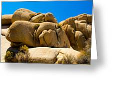 Joshua Tree 29 Greeting Card