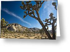 Joshua Tree Afternoon Greeting Card