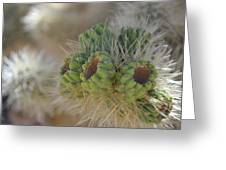 Joshua Tree Cholla Cactus Greeting Card