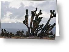 Joshua Tree Forest Ivanpah Valley Greeting Card