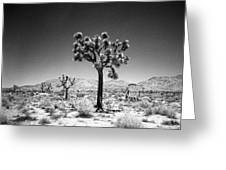 Joshua Tree Holga 1 Greeting Card