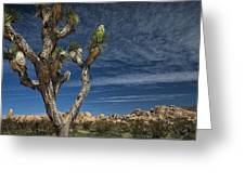 Joshua Tree In Joshua Tree National Park No. 279 Greeting Card