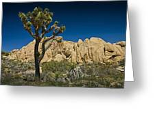 Joshua Tree In Joshua Tree National Park No. 323 Greeting Card