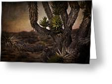 Joshua Tree In Mojave National Preserve Greeting Card