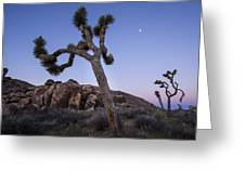Joshua Trees In The Morning Greeting Card
